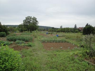 jardin1.png