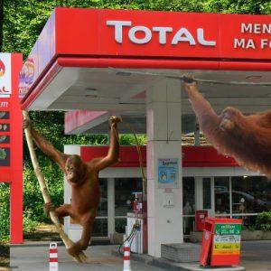 total_orang_outan.jpg